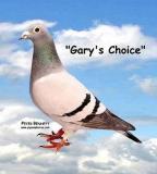 Garys Choice