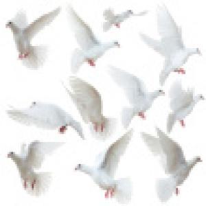 stock-photo-21039283-white-doves-flying-away.jpg